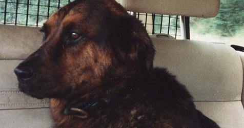 """Therapiehund """"Wickie"""" in Wels entführt (Bild: Privat)"""