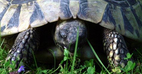Tierheim fordert für Findel-Schildkröte 140 € von Besitzerin (Bild: dpa/dpaweb/dpa/Bernd Thissen)