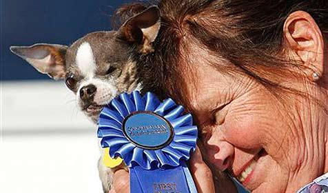 Princess Abby zum hässlichsten Hund der Welt gekürt (Bild: AP)