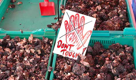 Kochbuch mit giftigem Rezept jahrelang verkauft (Bild: Wikimedia/Ilmari Karonen)