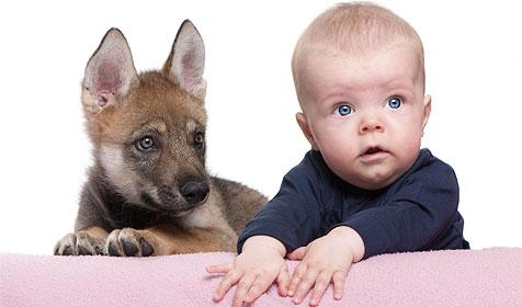 Wie du dein Haustier an dein Baby gew�hnst (Bild: � 2010 Photos.com, a division of Getty Images)