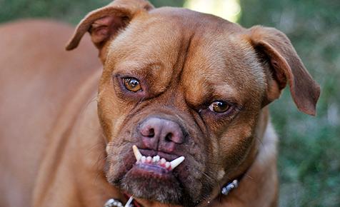 Studie bestätigt: Hunde imitieren ihre Herrchen