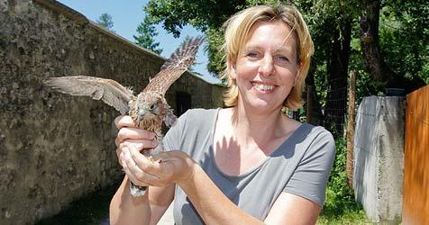 Immer mehr Greifvögel landen geschwächt im Zoo (Bild: Markus Tschepp)