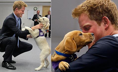 """Prinz Harry auf Besuch bei den """"Superhunden"""""""