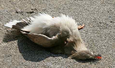 Vögel stellen sich tot - Aufregung bei Zoobesuchern (Bild: APA/TIERGARTENSCHÖNBRUNN/BARBARA FELDMANN)