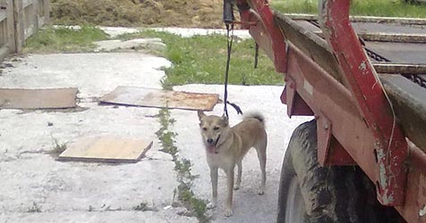 Erschütterung über Tierdrama auf Adneter Bauernhof (Bild: Tierrettung)