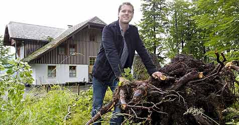 Baum stürzt auf Berggasthof in St. Gilgen (Bild: Markus Tschepp)