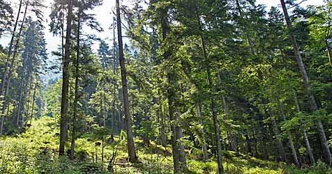 Touristen verlaufen sich in den Wäldern Hoheneichs (Bild: Christof Birbaumer)