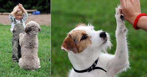 Hundetanz wird auch in Europa immer beliebter (Bild: dpa/Harald Tittel)