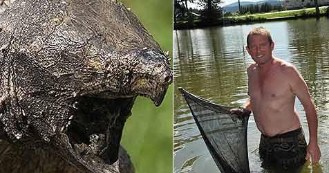 Jagd nach Schildkröten in Badesee (Bild: Einöder / Kronen Zeitung)