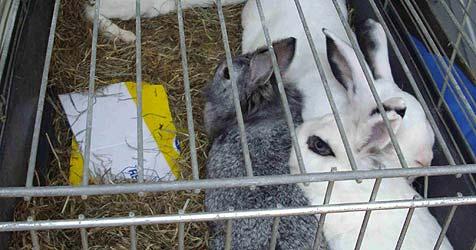 Tierheime atmen nach Urlaubssaison wieder auf (Bild: Tierschutzverein Vöcklabruck)