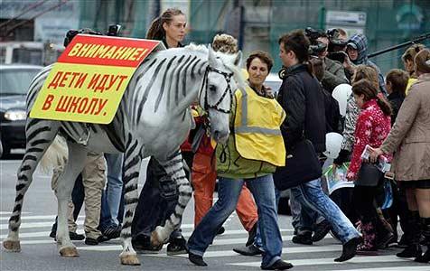 Moskaus Polizei lackiert Pferde zu Zebras um