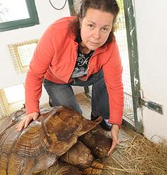 """""""Schildkröten müssen sich von Schock erholen"""" (Bild: Hannes Markovsky)"""