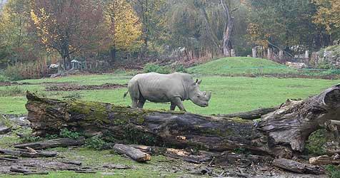 """Grün-Stadtrat will """"zweite Chance"""" für Tierpfleger (Bild: Zoo Salzburg)"""