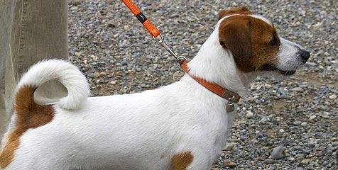 Hund lief seinem Herrl davon - und fuhr mit Zug weg