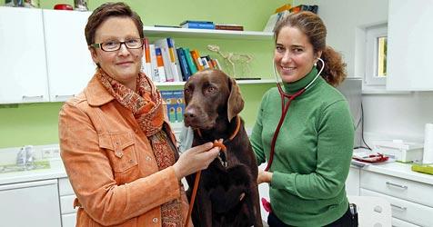Drei vergiftete Hunde durch ein tödliches Pulver (Bild: Markus Tschepp)