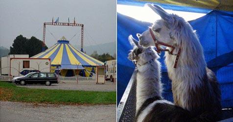 """Vier Pfoten"" ortet  Tierquälerei in Zirkus (Bild: Vier Pfoten)"