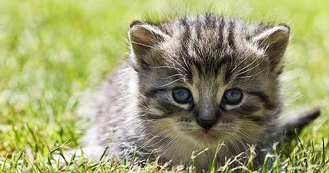 NÖ: Tierhasser warf vier Katzenbabys aus seinem Pkw (Bild: dpa/dpa-Zentralbild/Z1022 Patrick Pleul)