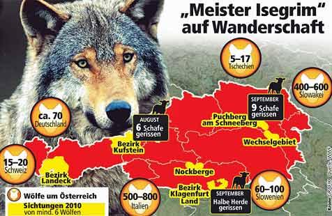 Sechs Wölfe bei uns - bald  Rudelbildung möglich (Bild: WWF)