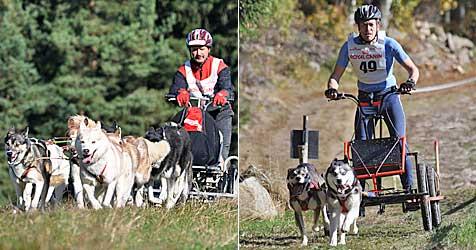 Fahrer und Hunde treten um Medaillen im Waldviertel an (Bild: APA/BSSC)