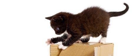 Catagility - Beschäftigung für die Katze (Bild: © 2010 Photos.com, a division of Getty Images)