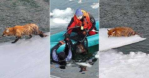 Feuerwehr rettet verirrten Fuchs aus misslicher Lage (Bild: FF Wartberg)