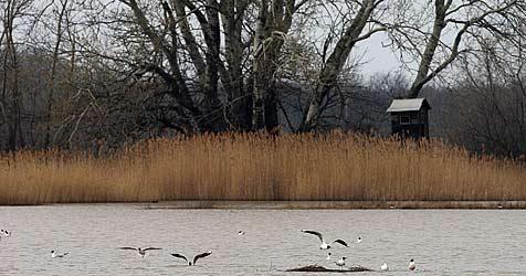 Männliche Leiche im Ratzersdorfer See entdeckt (Bild: APA/HERBERT PFARRHOFER)