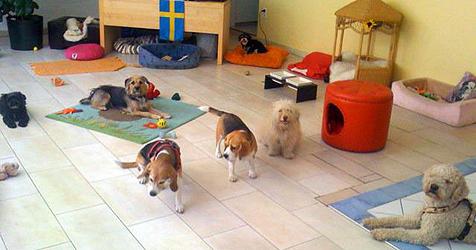 Hunde-Tagesstätte als Alternative zum Hundesitter (Bild: Balous Hundesofa)