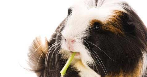 Den Umzug mit Meeris und Kaninchen meistern (Bild: © 2010 Photos.com, a division of Getty Images)