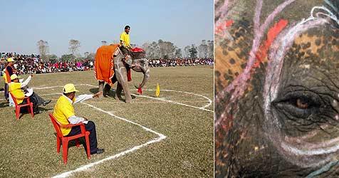 Erster Schönheits-Wettbewerb für Elefanten in Nepal (Bild: EPA)