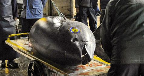 Thunfisch in Japan für 300.000 Euro versteigert