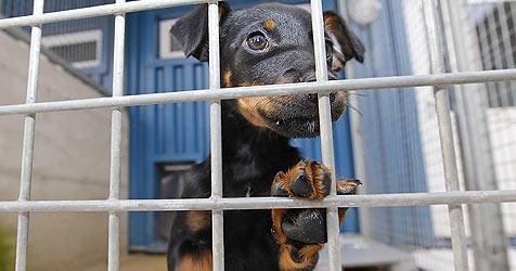 Zwist im Tierheim - Pfleger bangen um ihre Arbeitsplätze (Bild: Tschepp)