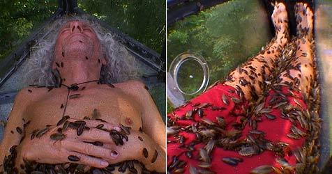 Ex-Hippie mit 30.000 Kakerlaken in Sarg eingesperrt (Bild: RTL)