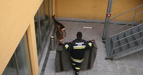 In Firma gefangen - Feuerwehr rettet zwei Rehe (Bild: FF Asten)