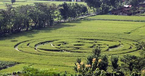 Kornkreis in Indonesien sorgt für Aufregung (Bild: EPA)
