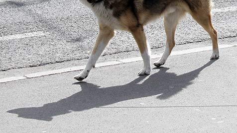 Hund in Reidling mit Giftköder getötet - erster Verdacht (Bild: Jürgen Radspieler)