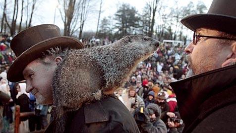 """Murmeltier """"Phil"""" sagt Winterende in den USA voraus"""