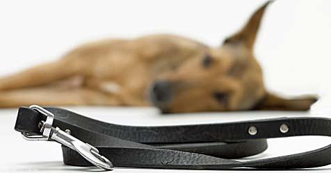 Tierheimhunden mit einer Patenschaft helfen (Bild: © 2011 Photos.com, a division of Getty Images)