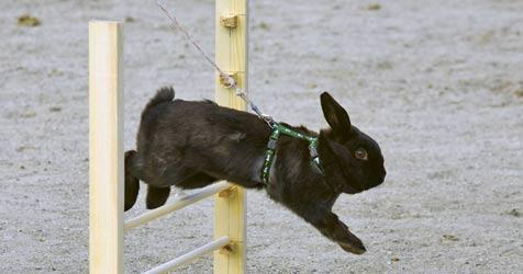 Kaninchen lernen gerne Tricks (Bild: © 2011 Photos.com, a division of Getty Images)