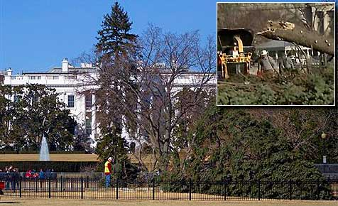 """USA brauchen neuen """"Nationalen Weihnachtsbaum"""""""