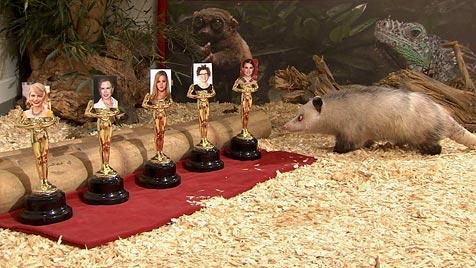 """Erster Auftritt von schielender """"Heidi"""" bei Jimmy Kimmel"""