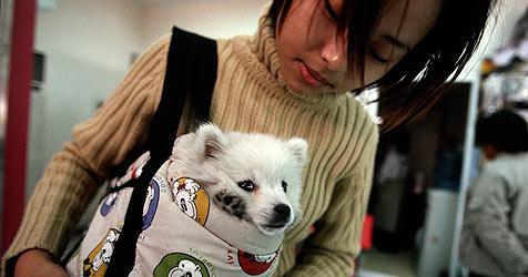Shanghai führt Ein-Hund-Politik ein (Bild: EPA)