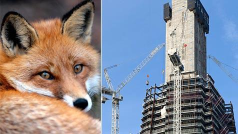 Fuchs lebte zwei Wochen in Londons höchster Baustelle (Bild: APA/dpa/Jens Leonhardt, www.the-shard.com)