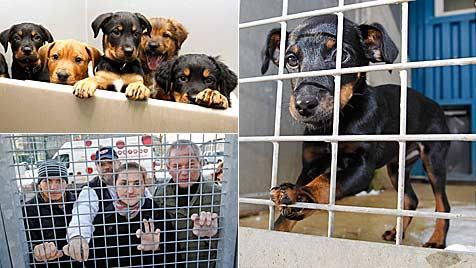Zwinger sind im Salzburger Tierheim für Hunde zu klein (Bild: Markus Tschepp)
