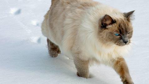 Kastrationspflicht gilt auch für Bauernhofkatzen (Bild: © 2011 Photos.com, a division of Getty Images)