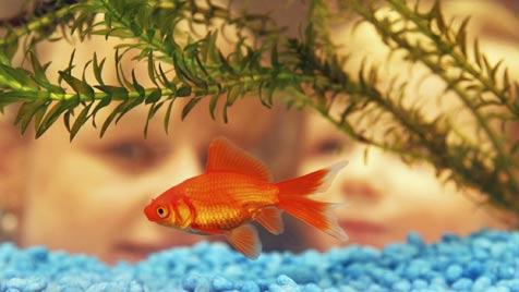 So gelingt der ungetrübte Einstieg in die Aquaristik (Bild: © 2011 Photos.com, a division of Getty Images)