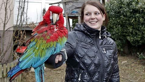 Hausbewohner von Papagei-Schreien gerettet (Bild: Markus Tschepp)