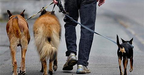 Jerusalem sagt Hundekot mit DNA-Bank den Kampf an (Bild: AP)