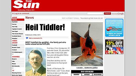 """England hat einen neuen """"Star"""": Goldfisch """"Adolfish"""" (Bild: www.thesun.co.uk)"""