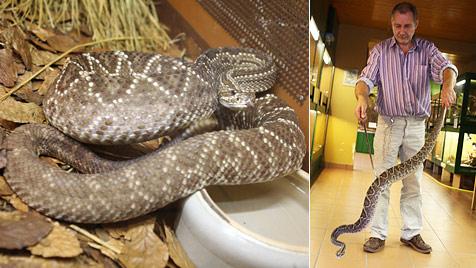 Was wird nach Todes-Biss aus den Schlangen? (Bild: Uta Rojsek-Wiedergut)